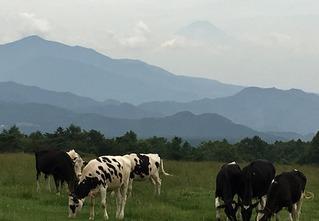 野辺山牧場
