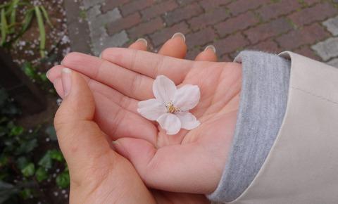 2013 桜1