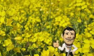 菜の花Yaz