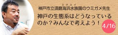 神戸の生態系はどうなっているのか?みんなで考えよう!