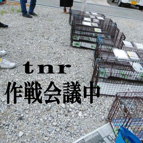 TNR作戦会議