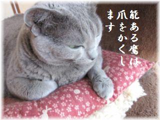 こびんちゃん(^^;