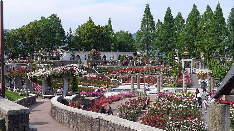 バラ公園07