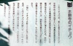 20151216 銀杏 (3)