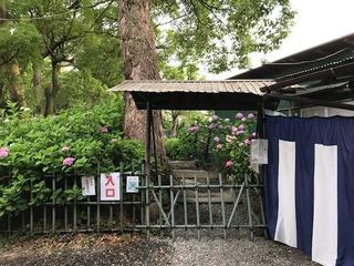 紫陽花苑1