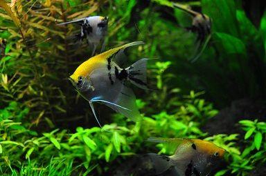 fish-1759844_960_720