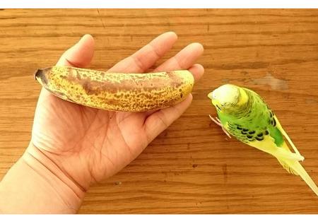 k-12-7-2019-banana