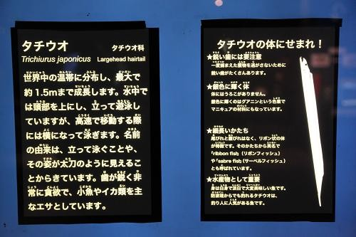Images of サバ亜目