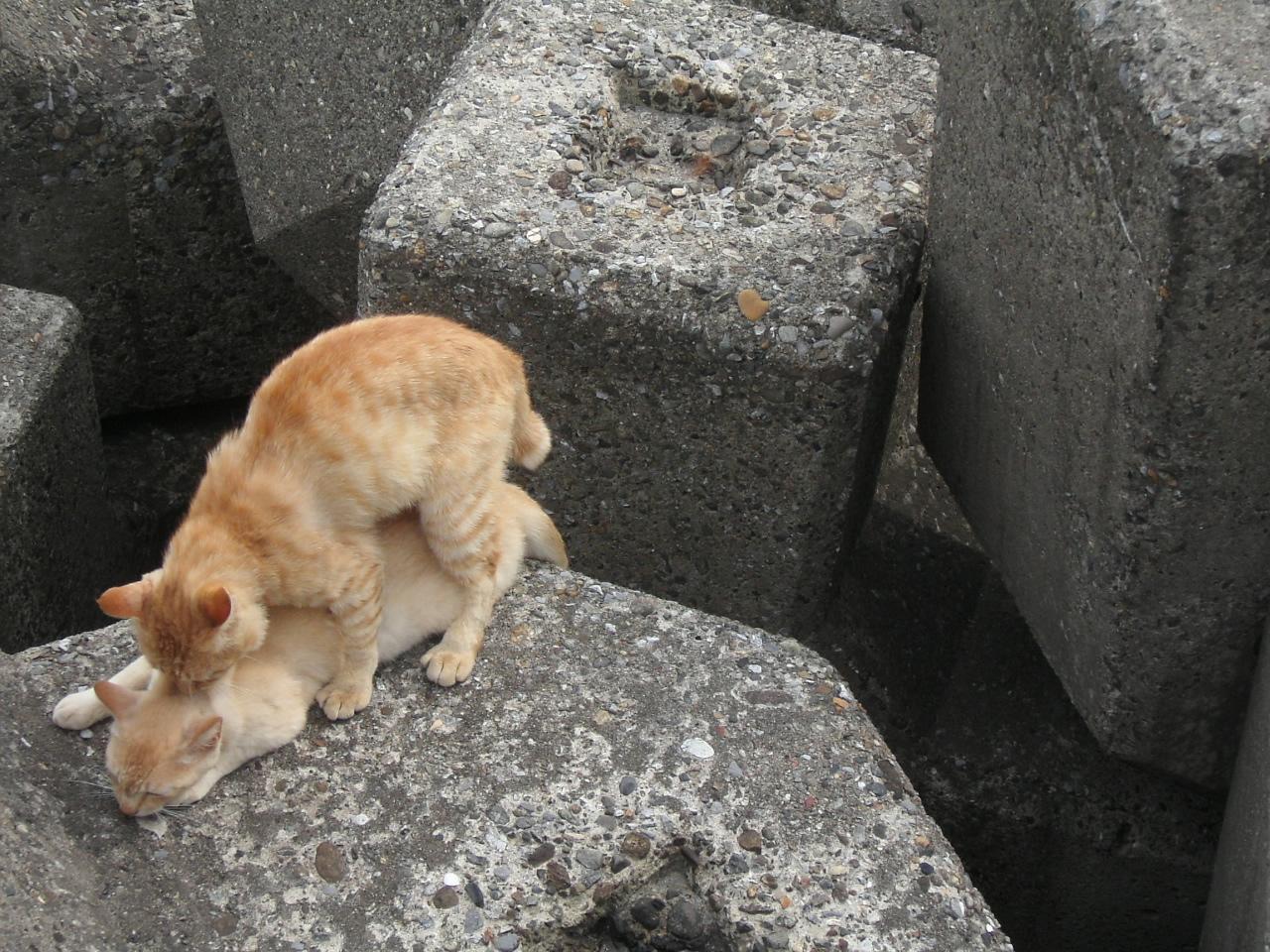猫 交尾 痛い