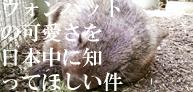 ウォンバットの可愛さを日本中に知ってほしい件