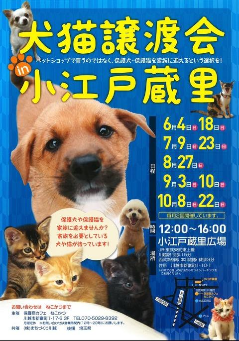 犬猫チラシ6月~10月