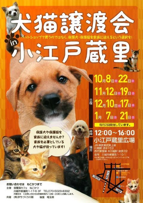 犬猫POP(10月~1月)