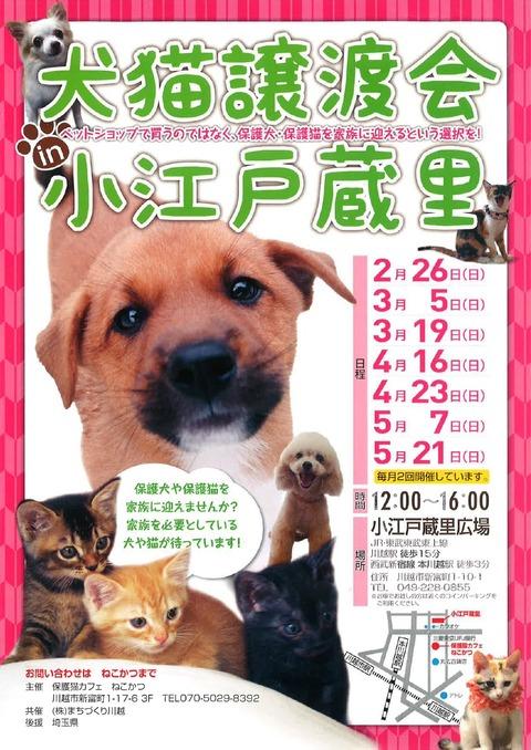 2月~5月犬猫チラシ