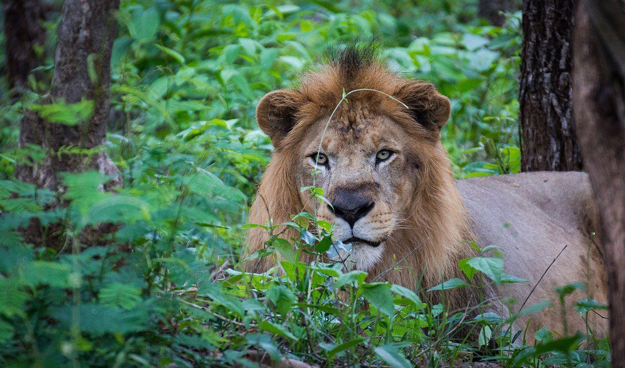 上半身 出来 は に は ライオン マー ある て ライオン いる は 何で シンガポール 下半身