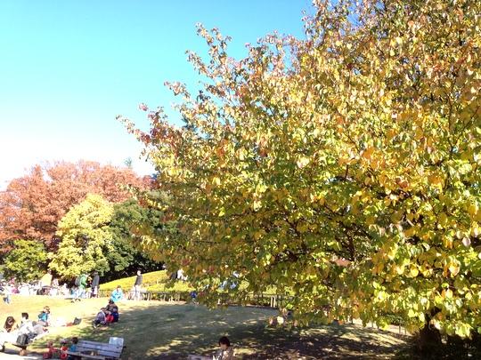 公園 紅葉1