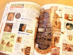 こども大百科 大図解 スズメバチの巣