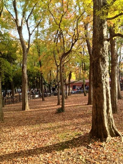 公園 紅葉2