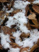 落ち葉に積もる雪
