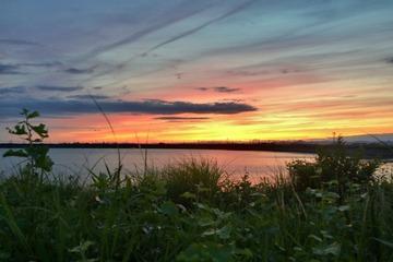 夏草と溜池と夕景