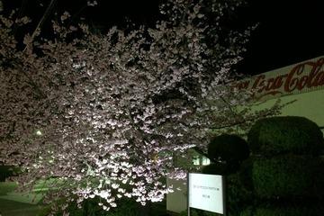 コカ・コーラ工場に咲く早咲き桜(夜間)