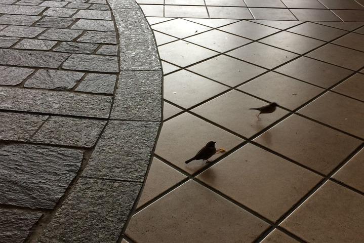 OAPタワー前の雀たち