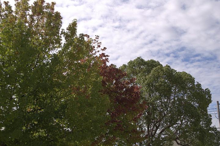 北場公園の秋(HDR風)