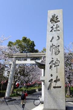 南あわじ八幡神社の桜2