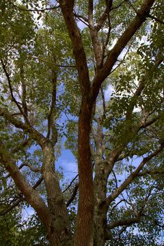 北場公園の樹木(ポートレート)