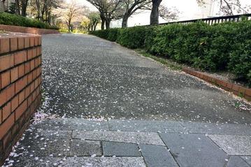 OAPタワー前の公園に散る桜