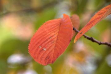 北場公園の桜・紅葉3