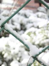 フェンス着雪