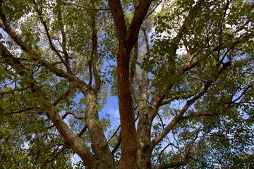 北場公園の樹木(ランドスケープ)
