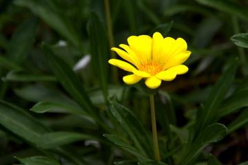拙宅の庭に咲く花2