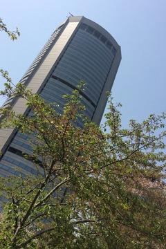 OAPタワー前の葉桜