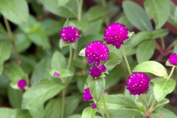 拙宅の庭に咲く花1