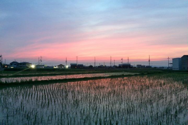 夏の夕景を映す水田
