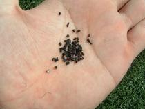 ロングパイル人工芝のゴムチップ