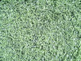 ロングパイル人工芝 2