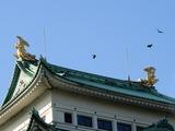 名古屋城にて5