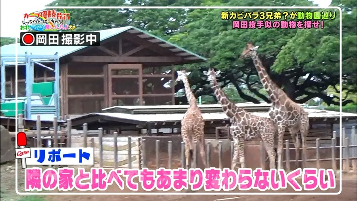 20161216金ぶちカープ優勝旅行38