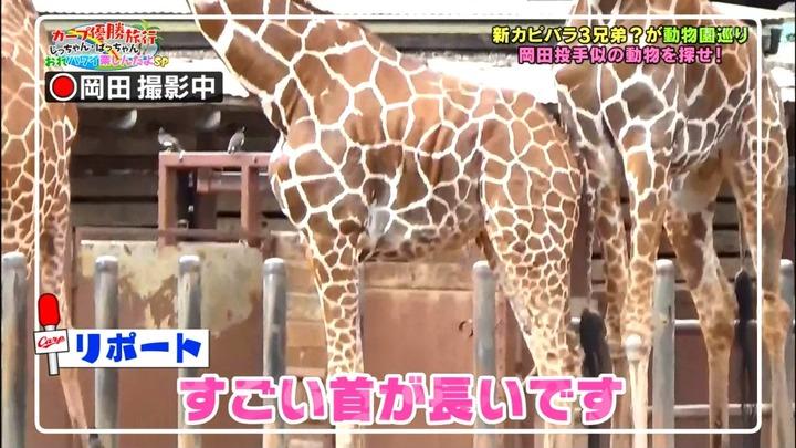 20161216金ぶちカープ優勝旅行37