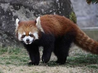 安佐動物園キクマル10