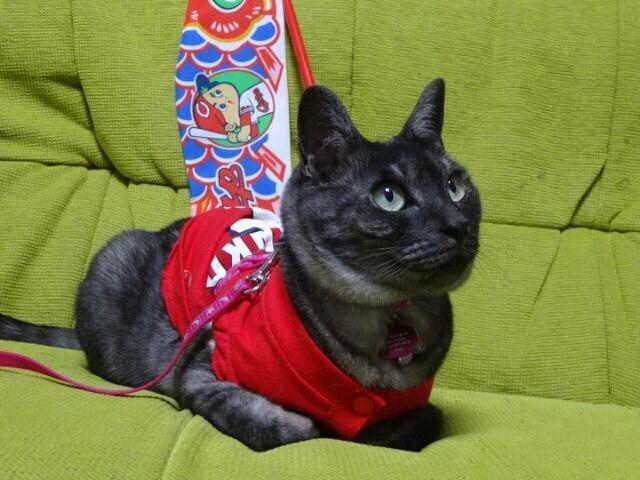 カープ猫3