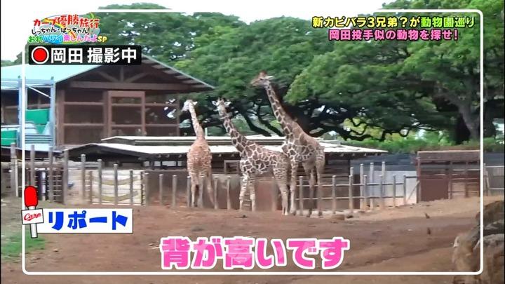20161216金ぶちカープ優勝旅行39
