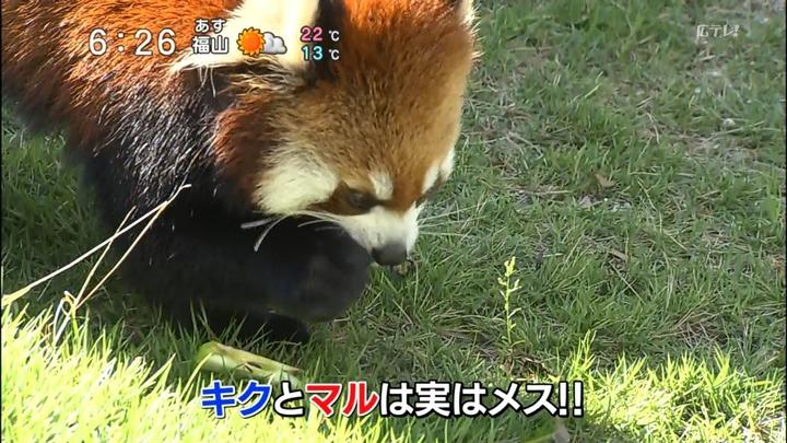 安佐動物園キクマル6