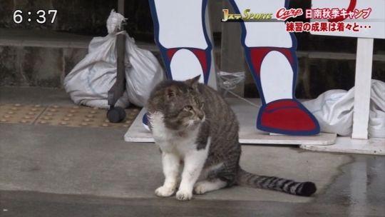 2014キャンプカープ猫2