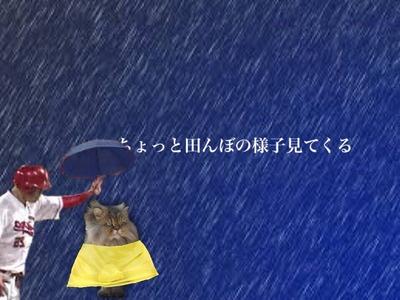 新井コラ傘8