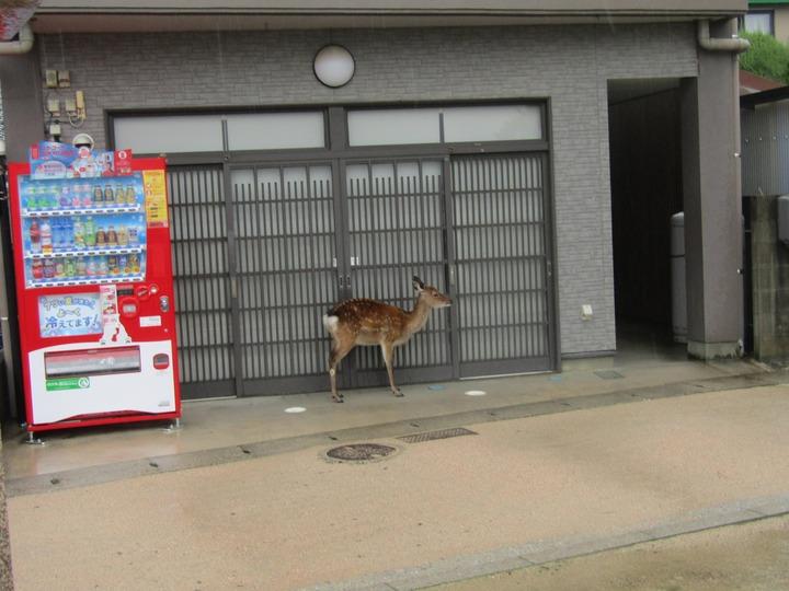 広島観光254