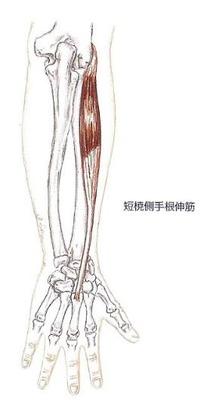 短橈側手根伸筋1
