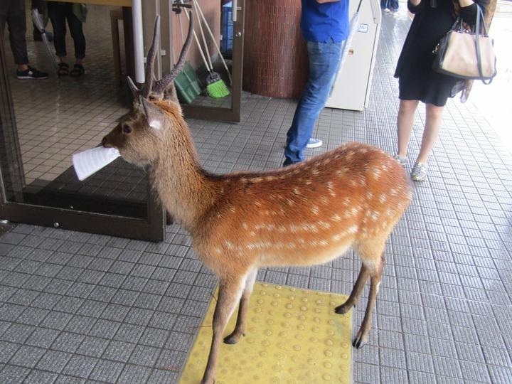 広島観光252